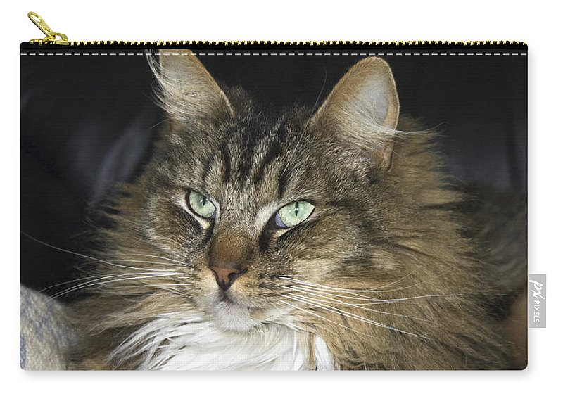 Fluffy Cat Carry-all Pouch featuring the photograph Handsome Cat by Sally Weigand