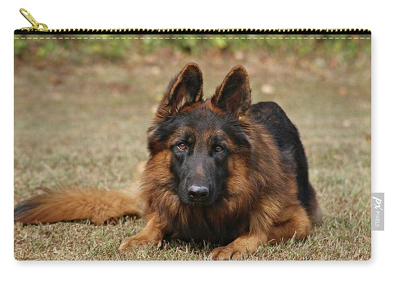 Dogs Carry-all Pouch featuring the photograph Handsome Fella by Sandy Keeton