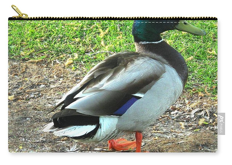 Mallard Carry-all Pouch featuring the photograph Handsome Fellow by Ian MacDonald