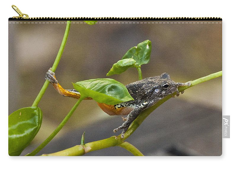 Hangin' Out Carry-all Pouch featuring the photograph Hangin' Out by Terry Anderson