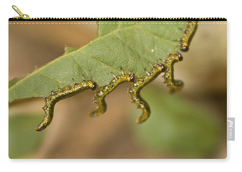 Larvae Carry-all Pouch featuring the photograph Hanging there by Douglas Barnett