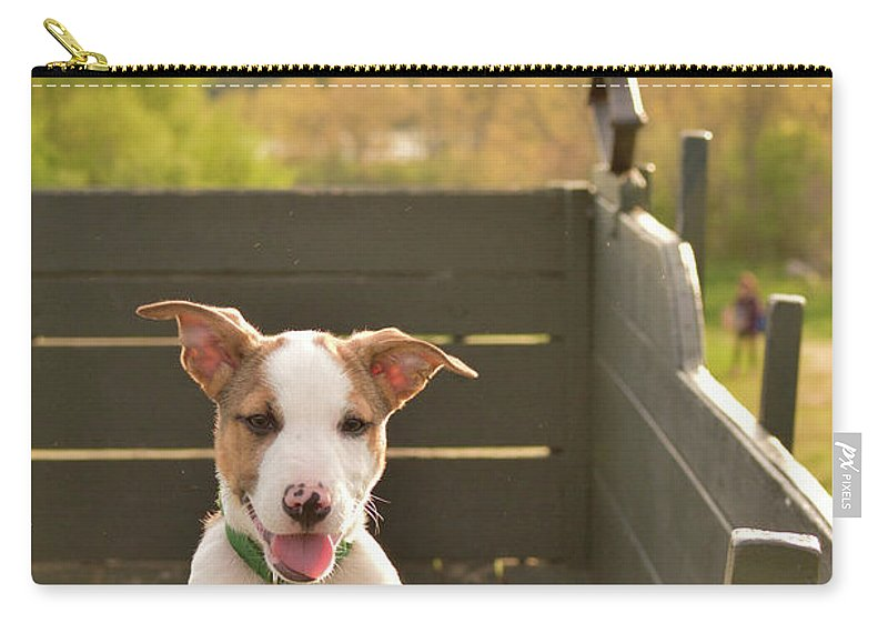 Catahoula Leopard Carry-all Pouch featuring the photograph Happy Puppy Wagon Ride by Justin Mountain