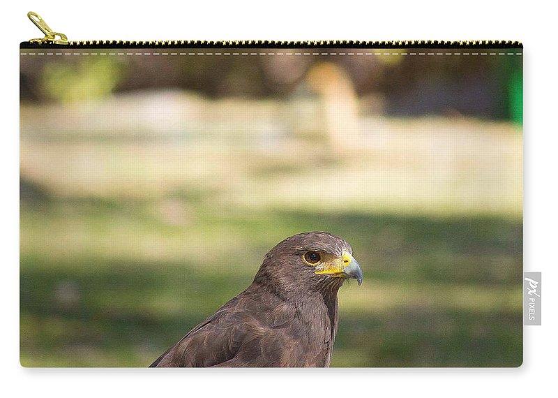 Animals Carry-all Pouch featuring the photograph Harris Hawk Looking At Infinity by Seb Estrada