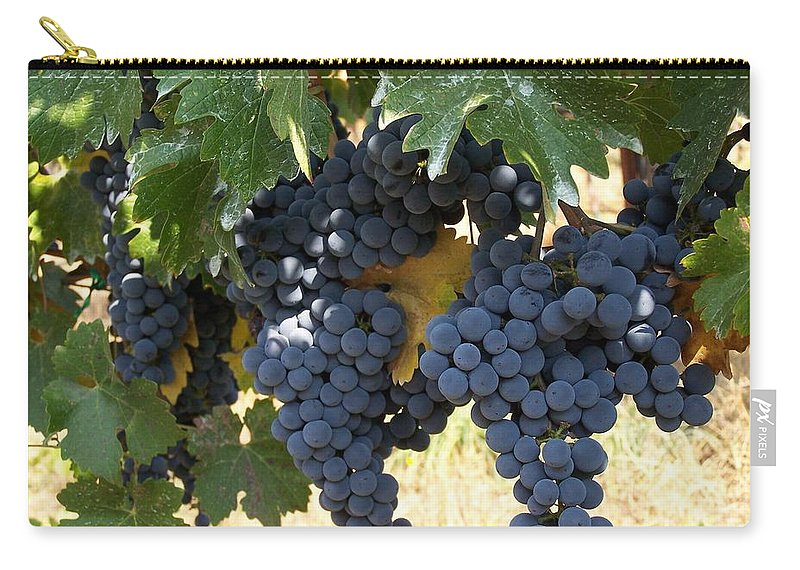 Grapes Carry-all Pouch featuring the photograph Harvest Time by Gale Cochran-Smith