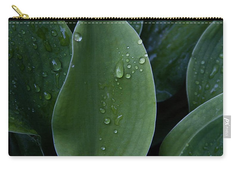 Hossta Carry-all Pouch featuring the photograph Hosta Dew Drops by Douglas Barnett