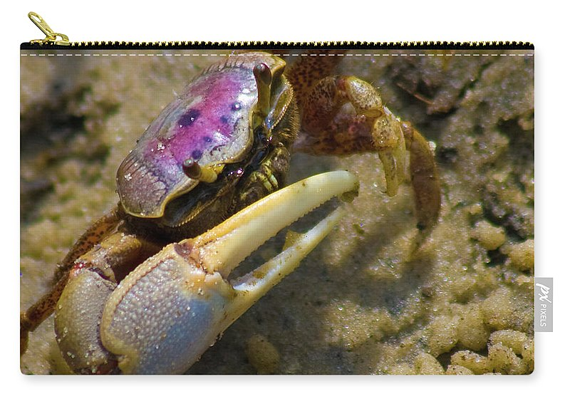 Topsail Island Carry-all Pouch featuring the photograph Have You Seen My Fiddle by Betsy Knapp
