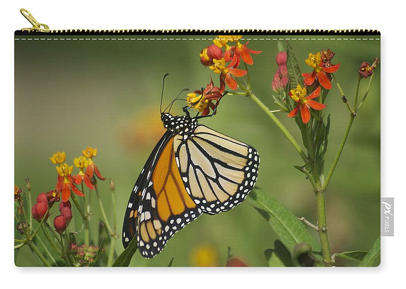 Wildlife Carry-all Pouch featuring the photograph Hawaiian Monarch 2 by Michael Peychich