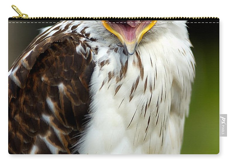 Hawk Carry-all Pouch featuring the photograph Hawk by Doug Gibbons