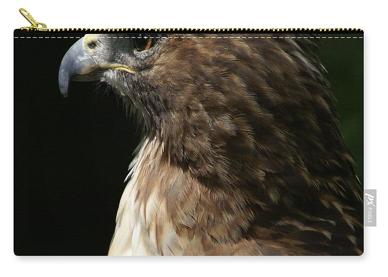 Hawk Carry-all Pouch featuring the photograph Hawk Portrait by Heather Coen