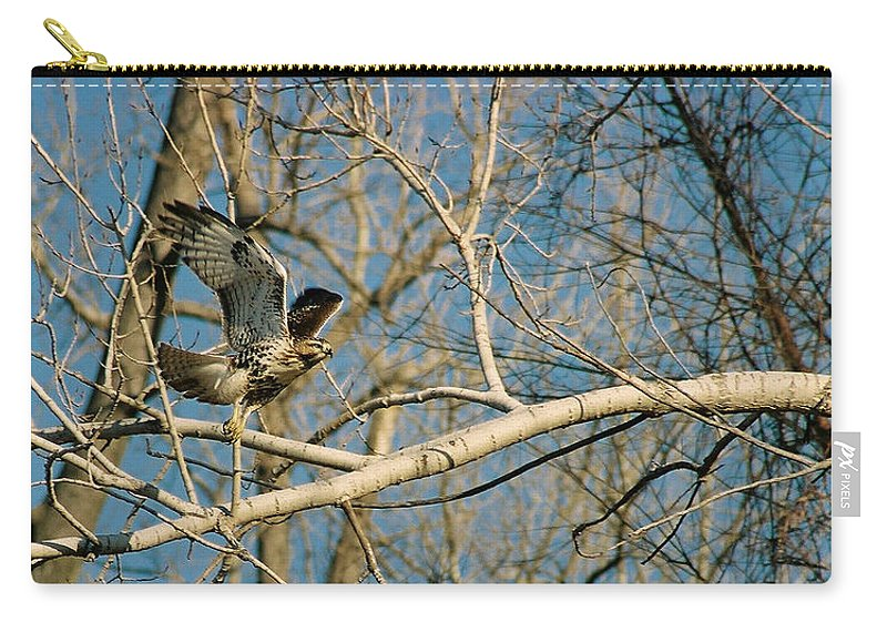 Hawk Carry-all Pouch featuring the photograph Hawk by Steve Karol