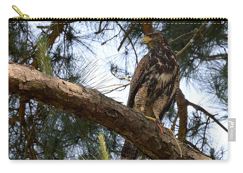 Hawks Carry-all Pouch featuring the photograph Hawkeye by Erin O'Neal-Morie