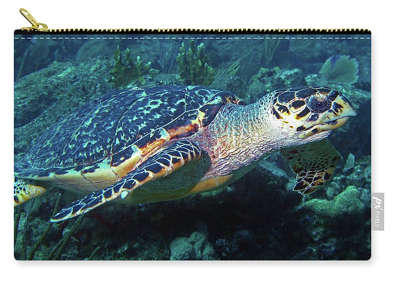 Hawksbill Sea Turtle Carry-all Pouch featuring the photograph Hawksbill Sea Turtle 3 by Pauline Walsh Jacobson