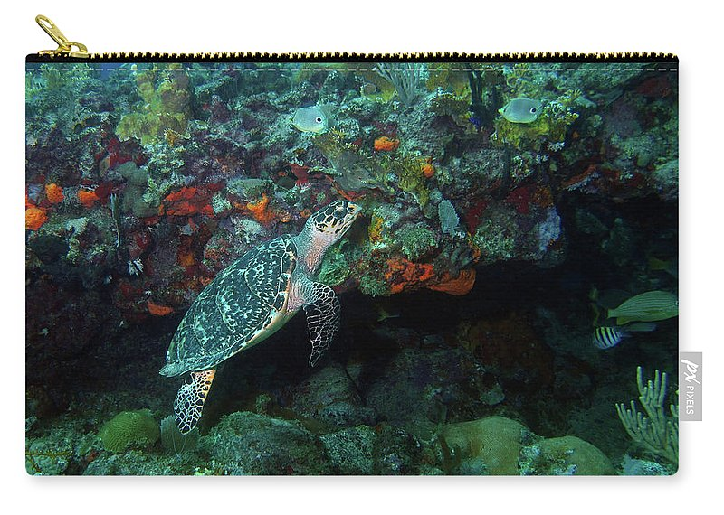 Hawksbill Sea Turtle Carry-all Pouch featuring the photograph Hawksbill Sea Turtle 4 by Pauline Walsh Jacobson