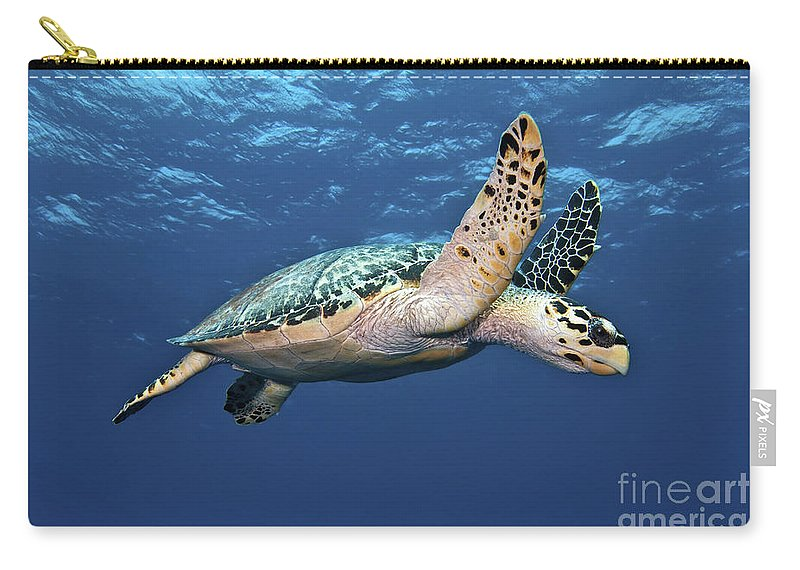 Caribbean Carry-all Pouch featuring the photograph Hawksbill Sea Turtle In Mid-water by Karen Doody