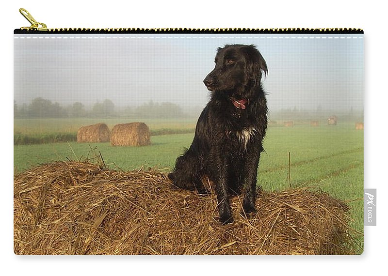 Dog Carry-all Pouch featuring the photograph Hay There Black Dog by Kent Lorentzen