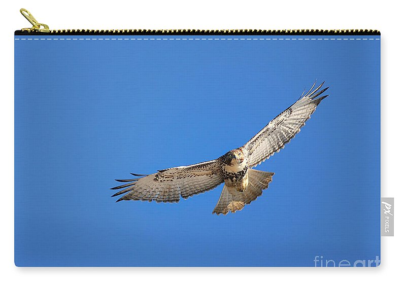 Hawk Carry-all Pouch featuring the photograph Head On Soar by Deborah Benoit