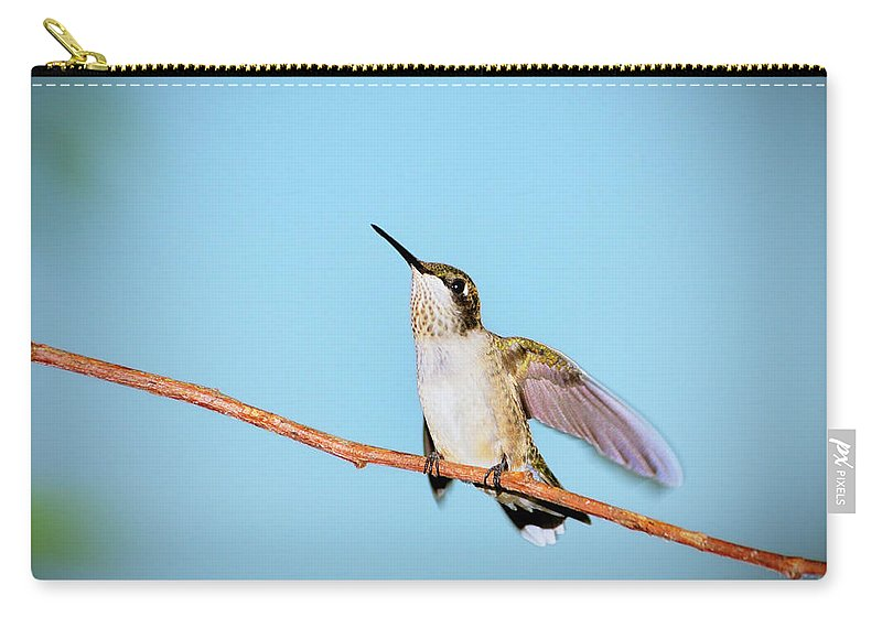Ruby-throated Hummingbird Carry-all Pouch featuring the photograph Heavenward by Betty LaRue