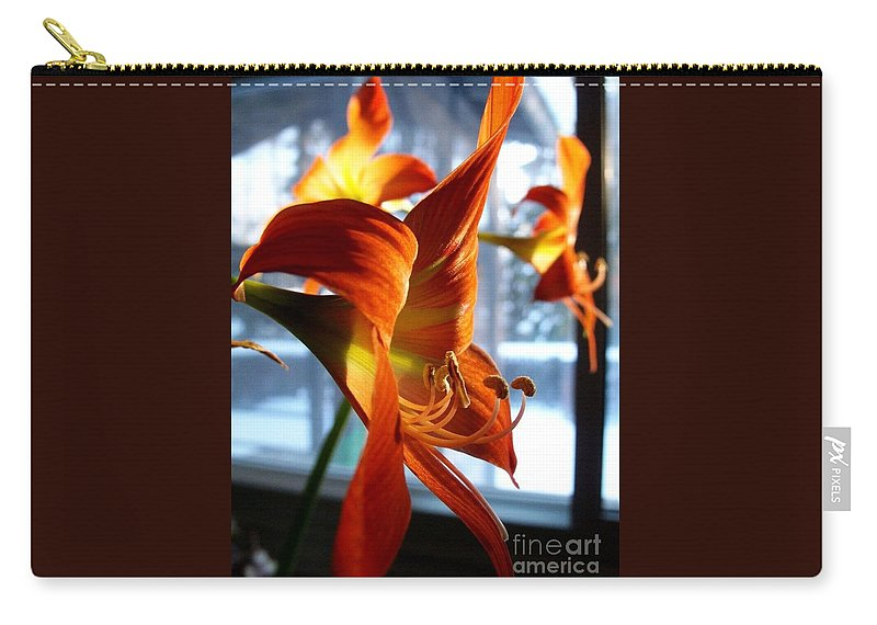 Amaryllis Carry-all Pouch featuring the photograph Heirloom Amaryllis by Karen Sloan