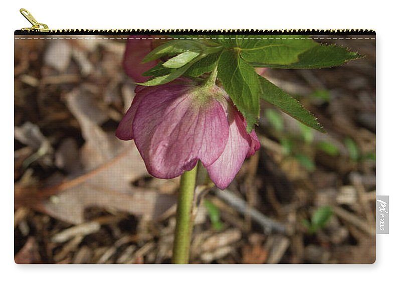 Heliborus Carry-all Pouch featuring the photograph Heliborus Nodding by Douglas Barnett
