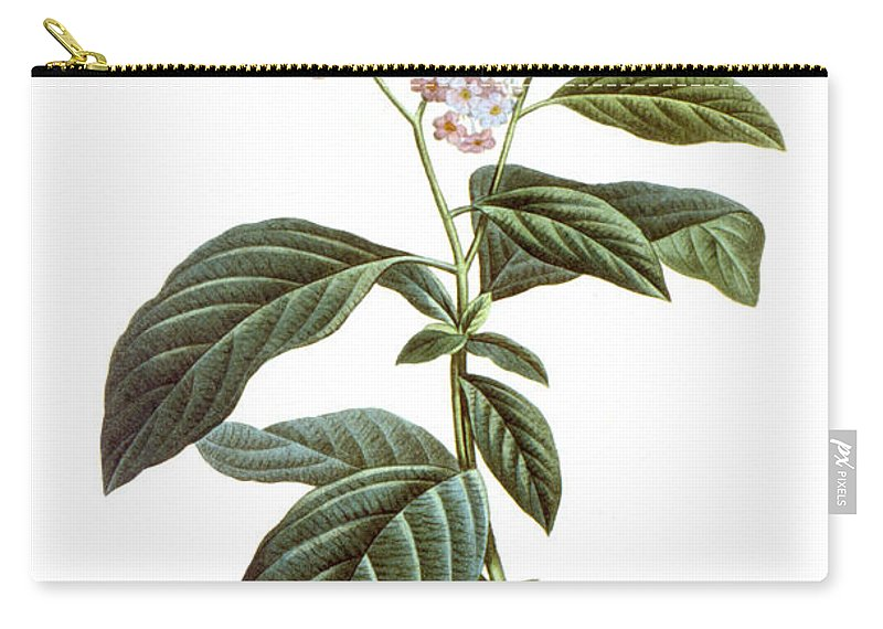 Biology Carry-all Pouch featuring the photograph Heliotrope by Granger