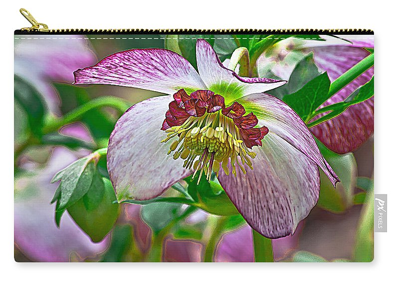 Hellebore Carry-all Pouch featuring the photograph Hellebore by Emerald Studio Photography