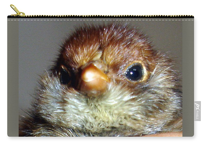 Chick Carry-all Pouch featuring the photograph Hello Chick by Susan Baker