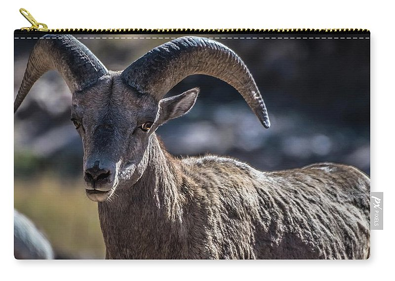 Peak To Peak Highway Carry-all Pouch featuring the photograph Hello There by Gayne Dorio