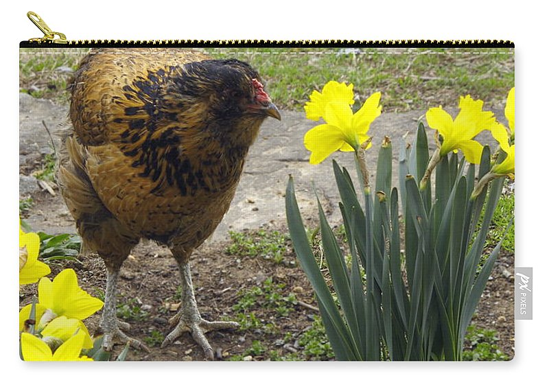 Brown And Tan Hen Walking Carry-all Pouch featuring the photograph Hen And Daffodils by Sally Weigand