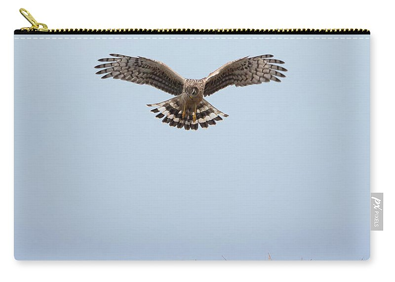 Hen Carry-all Pouch featuring the photograph Hen Harrier Hovering by Peter Walkden
