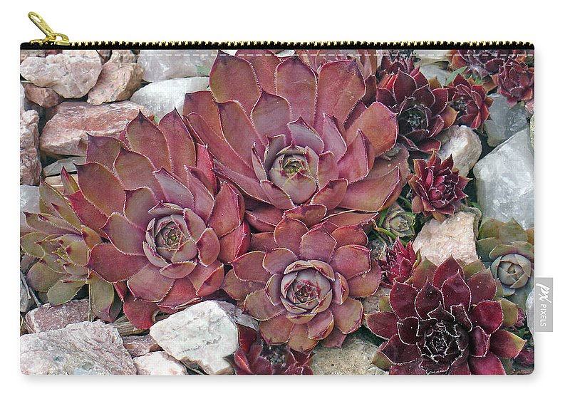 Landscape Carry-all Pouch featuring the photograph Hens And Chickens by Steve Karol