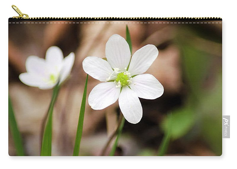 Hepatica Carry-all Pouch featuring the photograph Hepatica Wildflowers by Christina Rollo