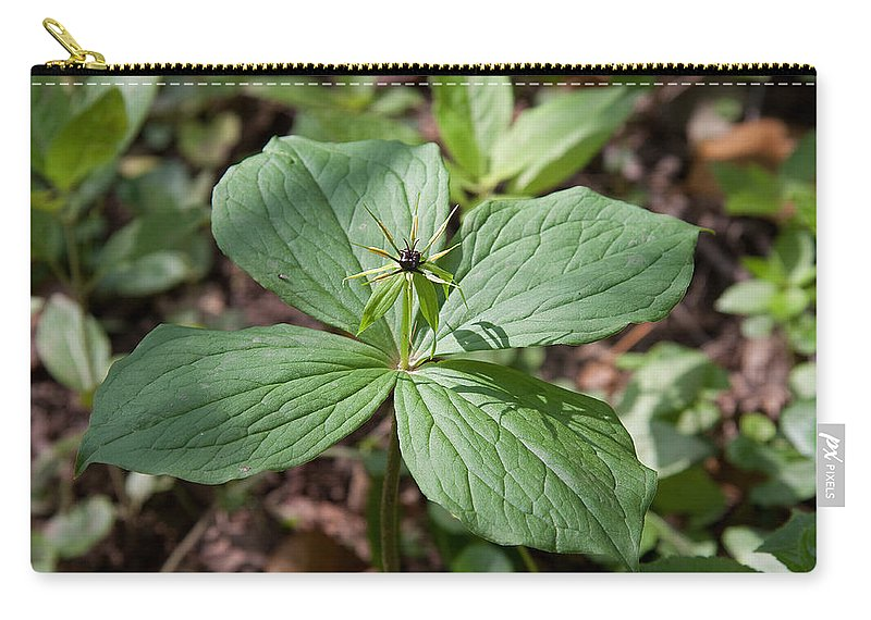 Herb Paris.flower.plant Carry-all Pouch featuring the photograph Herb Paris by Bob Kemp