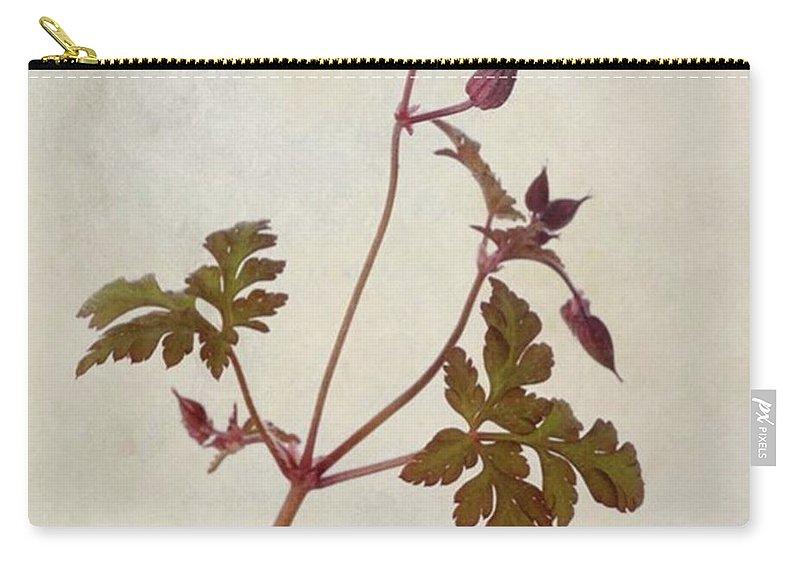 Beautiful Carry-all Pouch featuring the photograph Herb Robert - Wild Geranium  #flower by John Edwards