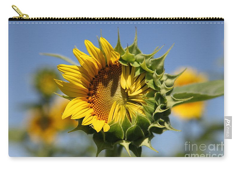 Sunflowers Carry-all Pouch featuring the photograph Hesitant by Amanda Barcon
