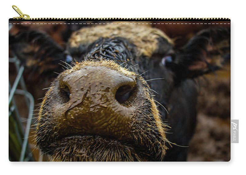 Cow Cattle Macro Landscape Animal Farm Outdoors Cows Closeup Mud Fence Ears Face Eyes Nose Smiling Smile Carry-all Pouch featuring the photograph Hey.. by Tommy Schuch