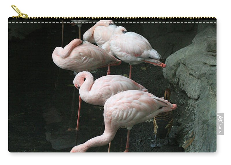 Scene Carry-all Pouch featuring the photograph Hide And Seek by Mary Mikawoz
