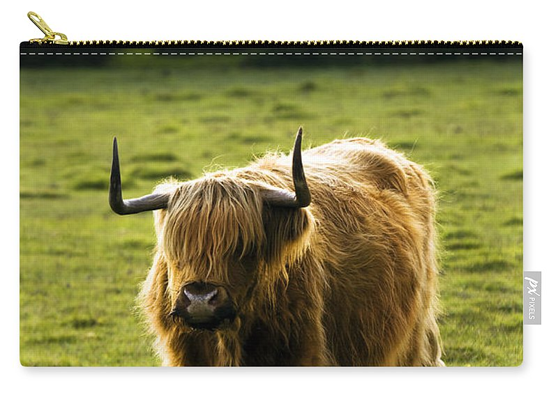 Heilan Coo Carry-all Pouch featuring the photograph Highland Cattle by Angel Ciesniarska