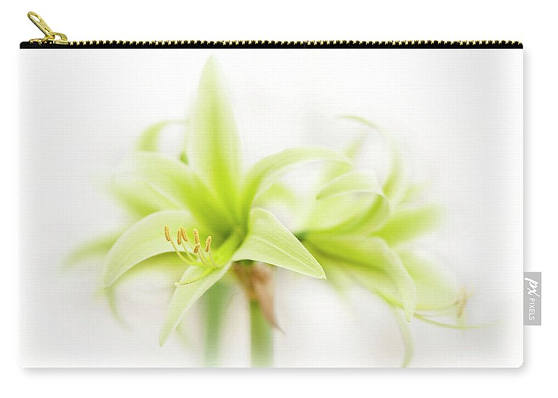Hippeastrum Carry-all Pouch featuring the photograph Hippeastrum Evergreen by Jacky Parker