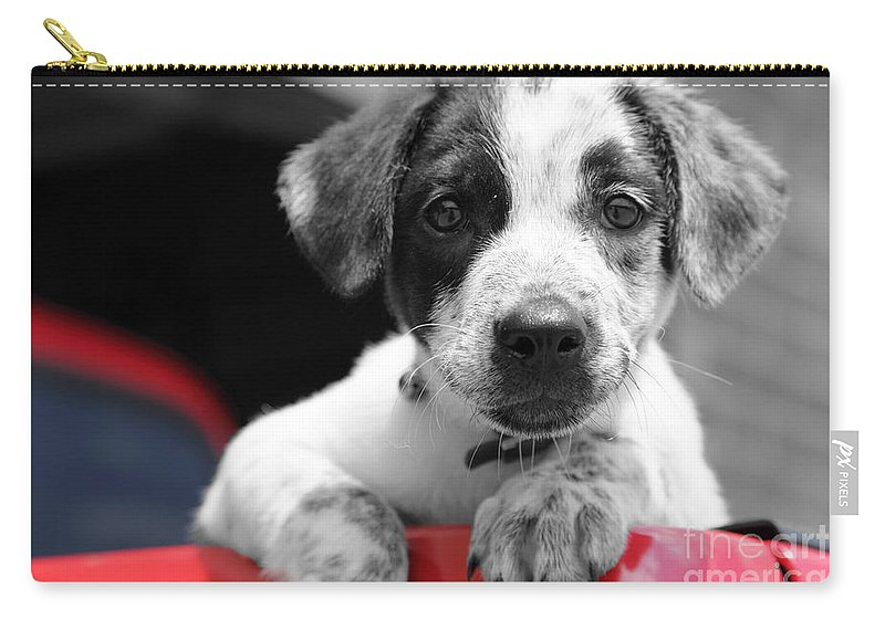 Dogs Carry-all Pouch featuring the photograph Hmmm by Amanda Barcon