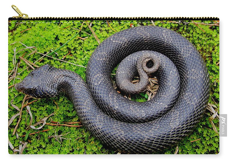 Eastern Hognose Snake Carry-all Pouch featuring the photograph Hognose Spiral by Joshua Bales