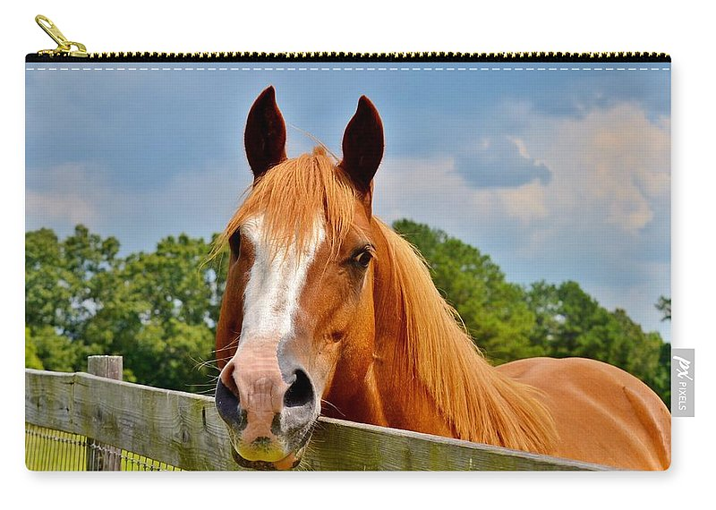 Horse Carry-all Pouch featuring the photograph Holly Springs by Eileen Brymer