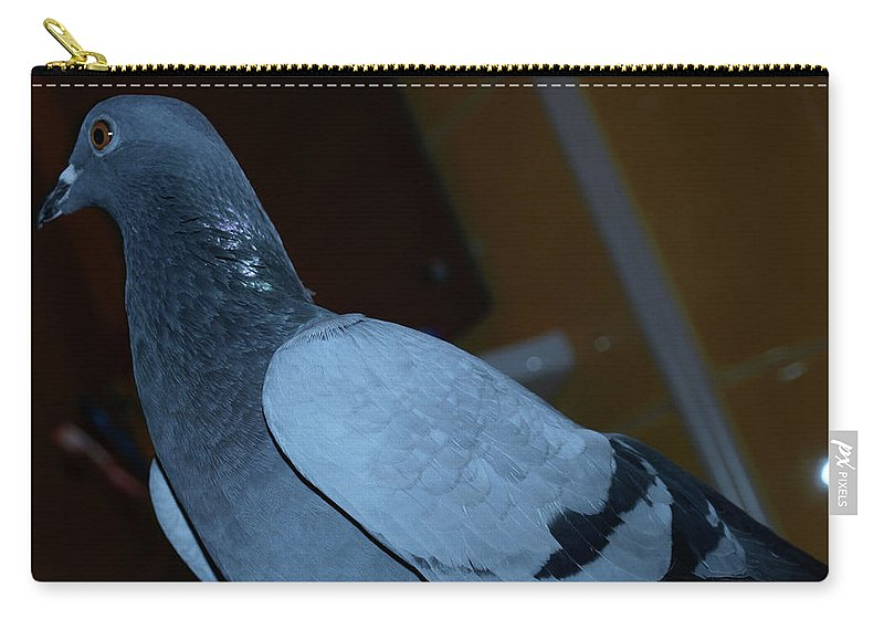 Portrait Carry-all Pouch featuring the photograph Homing Pigeon by Crina Iancau