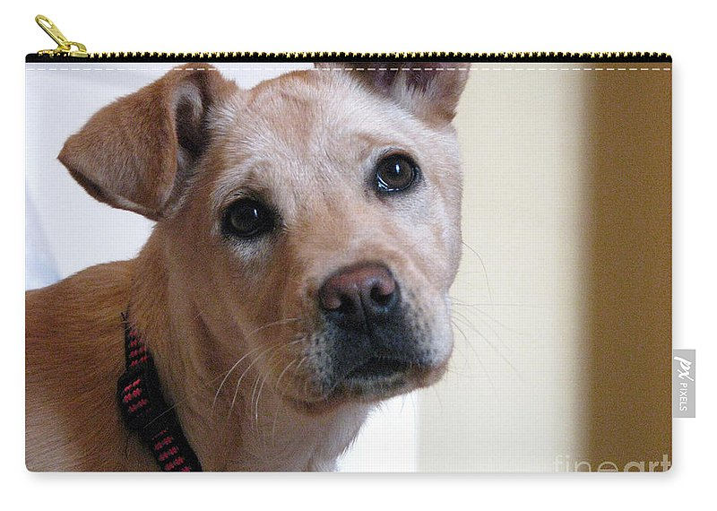 Dog Carry-all Pouch featuring the photograph Honey by Amanda Barcon