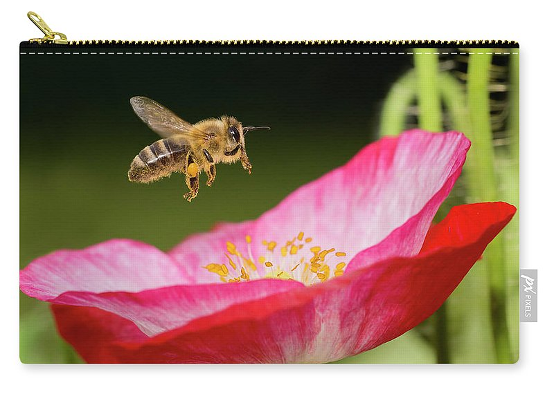 Honey Bee And Poppy Flower Carry All Pouch For Sale By Mircea Costina Photography