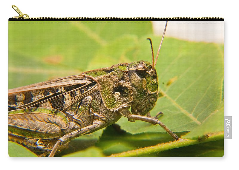 Grasshopper Carry-all Pouch featuring the photograph Hopper Face To Face by Douglas Barnett