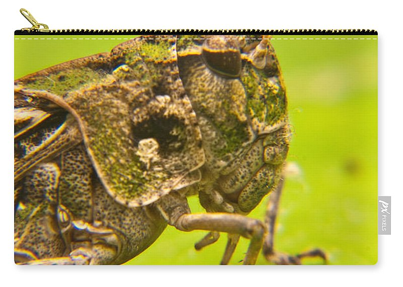 Grashopper Carry-all Pouch featuring the photograph Hopper Facial by Douglas Barnett