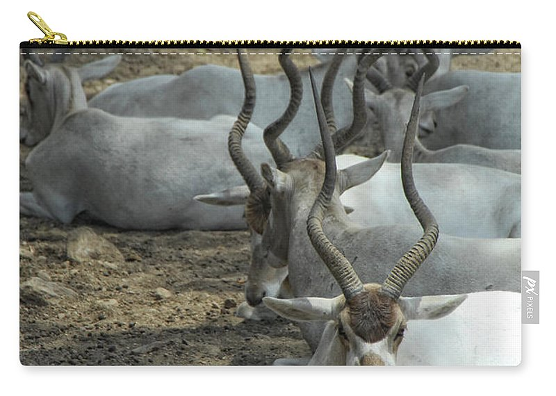 Addax Carry-all Pouch featuring the photograph Horney by Donna Blackhall