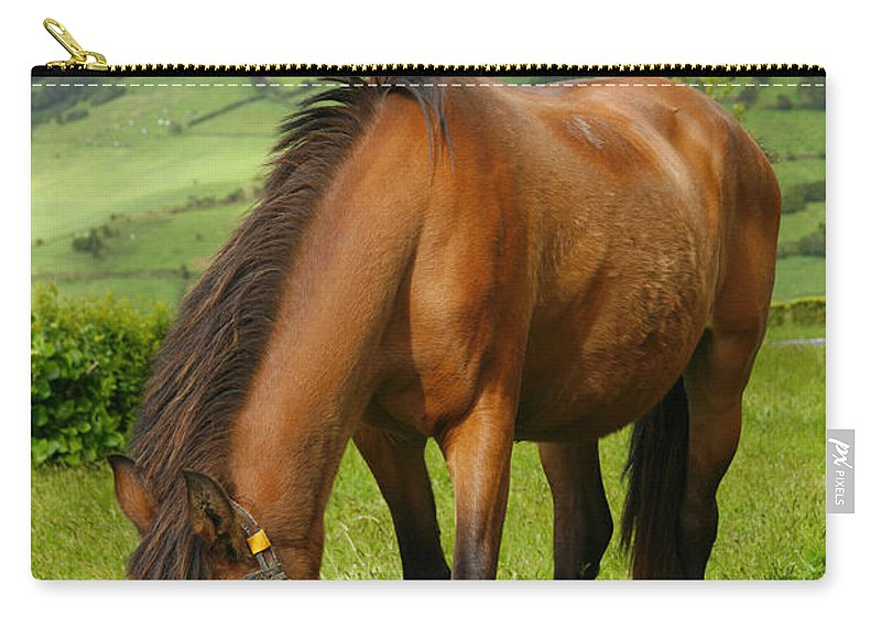 Animals Carry-all Pouch featuring the photograph Horse Grazing by Gaspar Avila