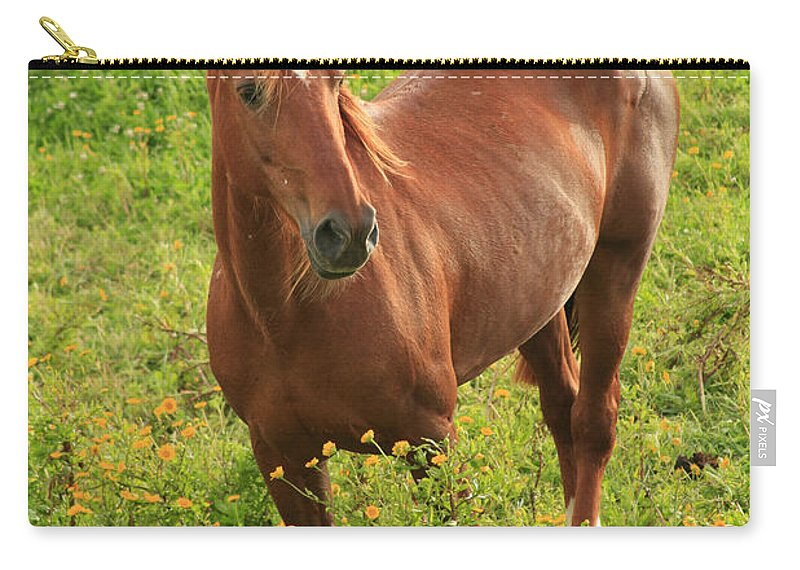 Animals Carry-all Pouch featuring the photograph Horse In A Field With Flowers by Gaspar Avila