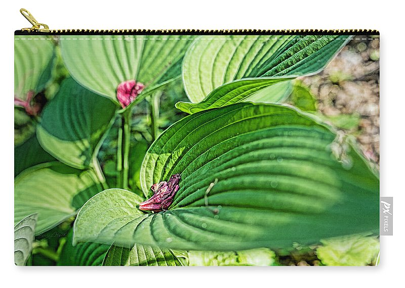 2015 Carry-all Pouch featuring the photograph Hosta Bed by Sharon Popek
